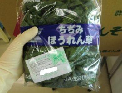 20121210群馬県産ちぢみほうれん草.JPG