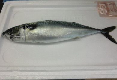 oshirase20120223-5.jpg